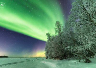Aurora-fascione-alberi-bianchi