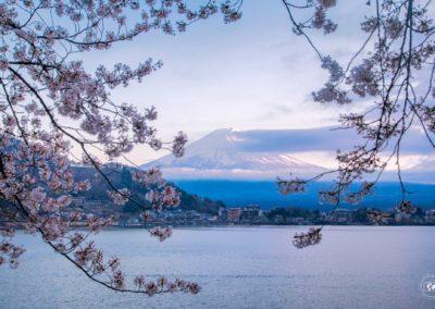 Fuji-Sakura-lago