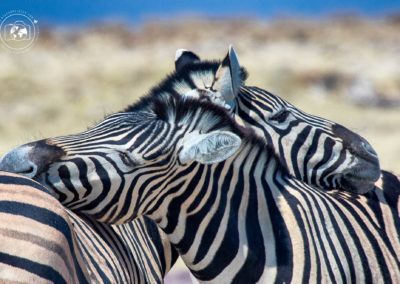 etosha-all-you-need-is-love