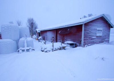 fattoria-ghiacciata