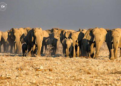 mandria-di-elefanti