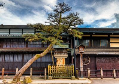Takayama-tree